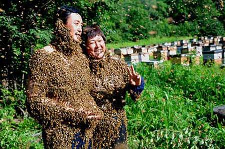 اغرب زفاف والمعازيم النحل