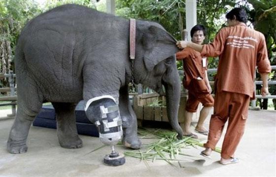 اصطناعى لفيل
