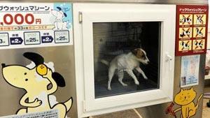 غسالة أوتوماتيكية لغسل الكلاب والقطط بالشامبو!