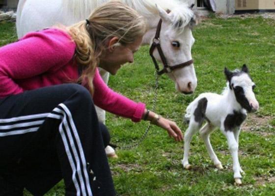 بالفيديو والصور أينشتاين يدخل جينس كأصغر حصان بالعالم horse1.jpg