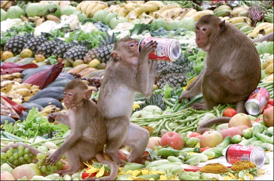 وليمه ضخمه عشان القرود