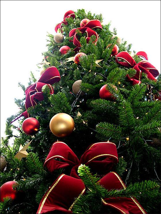 شجرة ـــــــــالميلاد.. ّّ~~~~ christmas_tree.jpg