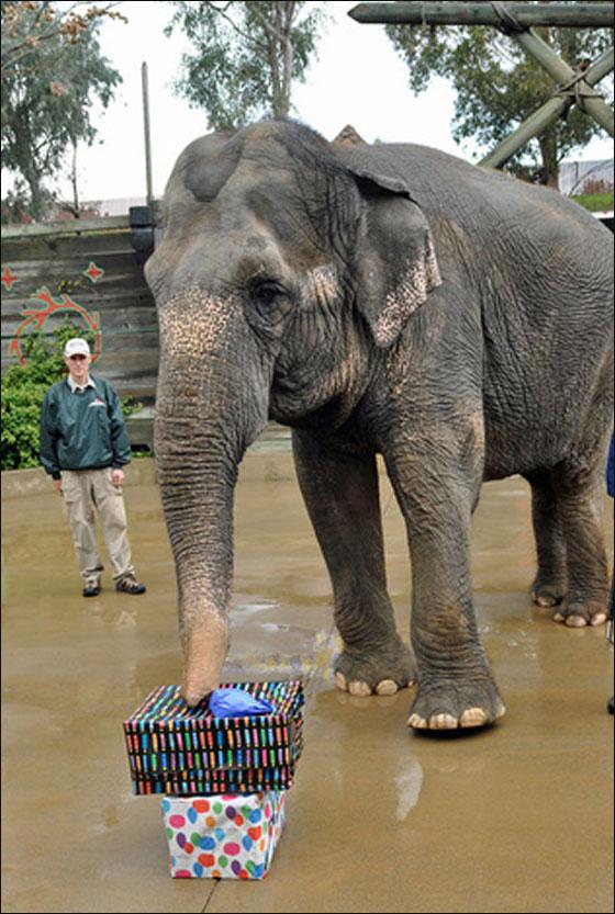 وفاة اكبر فيلة معمرة في امريكا وعمرها 71 عاما!
