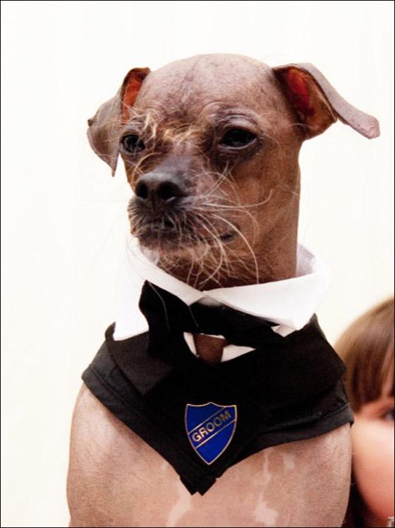 امراة تتزوج من كلب  !!! dog_1.jpg