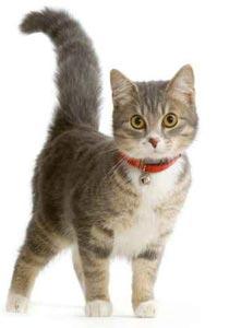 بلطجي كردي تعدى على الناس بالسكانين.. وتم اعتقاله لذبحه قطة!