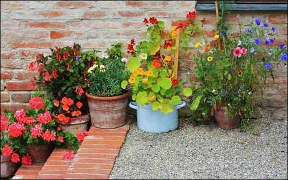 قواوير للورود بأشكال وألوان رائعة تزيد منزلك جمالا!