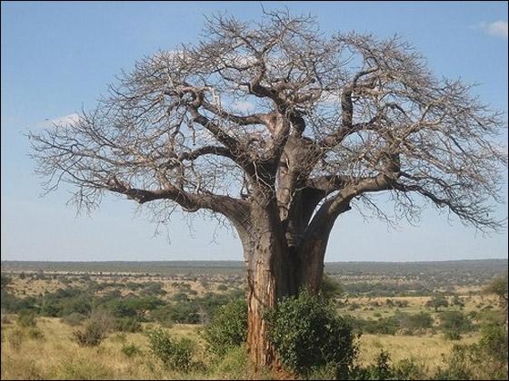 اليكم.. اشكال مذهلة من الاشجار!!