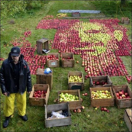 بالصور.. فنان كندي يستخدم 3500 تفاحة لرسم ستيف جوبز!!