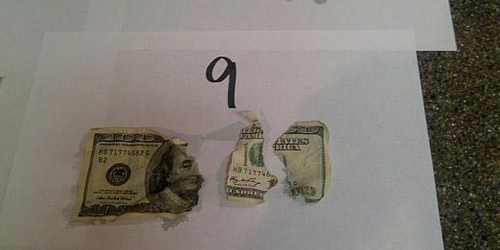 كلب جائع يلتهم 1000 دولار من الأوراق النقدية في غياب مالكيه!