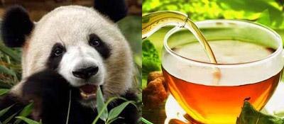أغلى شاي بالعالم مصنوع من فضلات الباندا!!