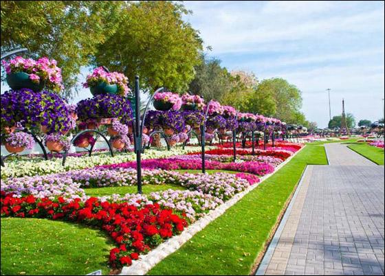 حديقة  بدولة الإمارات العربية المتحدة مرصعة بأجمل الورود!!