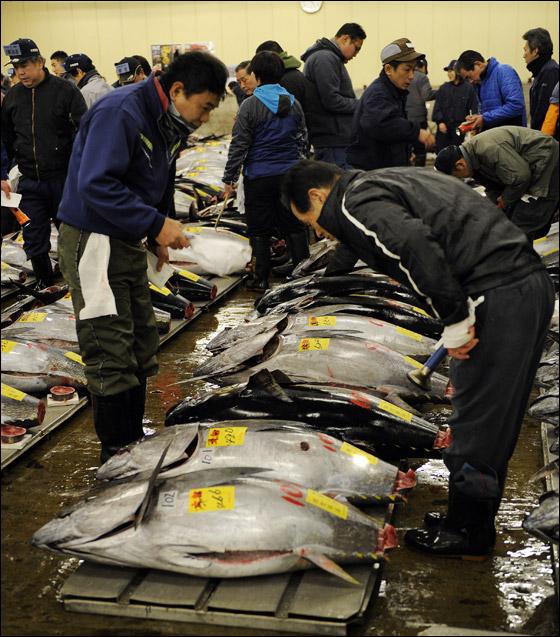 سمكة تونة تحطم الرقم القياسي بمبلغ 735 ألف دولار!