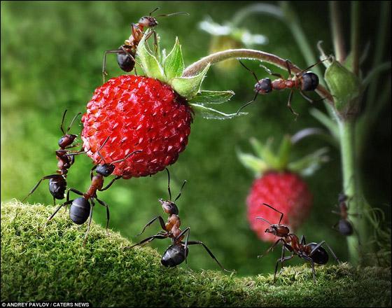 فنان يلتقط صورا اسطورية للنمل وهو يقوم بمهام غير اعتيادية!