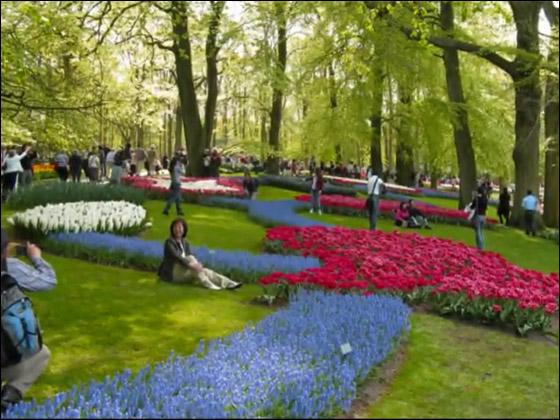 شاهدوا بالفيديو المعرض الذي جذب عشاق زهور التوليب في هولندا