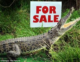 عائلة تعرض تمساحا للبيع يؤدي دور كلب الحراسة!