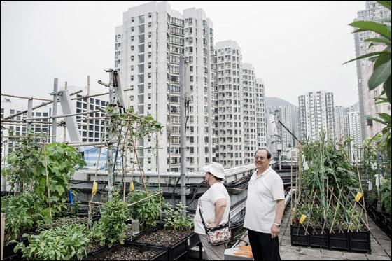 مزارع فى الصين فوق ناطحات السحااااااااااااب