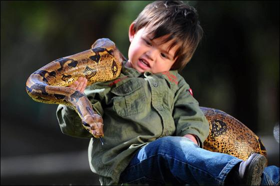 بالصور.. طفل يبلغ عامين يحمل افعى وزنها 10 كجم بدون خوف!!