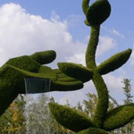الفن والابداع في قص الشجر