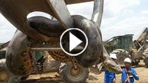 ثعبان عملاق يظهر لعمال برازيليين في احد الكهوف.. فيديو وصور