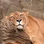 النوم سلطان  :-)