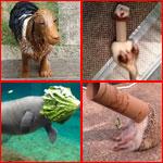 مجوعة صور طريفة لحيوانات جعلت من نفسها أضحوكة