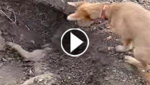 فيديو مؤثر: تصرف غير متوقع من كلب لصاحبه الذي قتل في حادث دهس