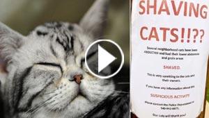 الشرطة الامريكية تبحث عن مجهول يخطف القطط ويقص شعرها!