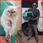 علاج قطة من غزة في إسرائيل يثير الجدل! هل حياة الحيوان أهم من الانسان؟