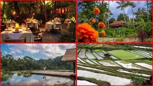 جزيرة بالي عروس وجوهرة اندونيسيا.. وما ينتظرك أكثر! صور