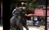الأفيال تلعب كرة السلة في تايلاند
