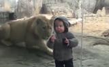 من خلف الزجاج حيوانات تضحك وتفرح الأطفال