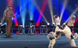 موهبة فن واتقان تدريب الكلاب مدهشة