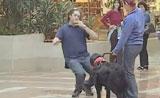 مواقف ظريفه ولطيفة مع الكلاب في الكاميرا