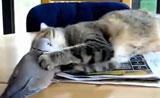 حركات قطط رائعة وممتعة