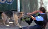 كلب بوليسي يعصي الأوامر