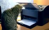 طرائف القطط... قطط مضحكة جداً... شاهد واضحك بس