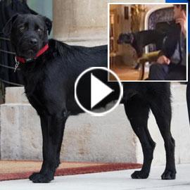 بالفيديو.. كلب  الرئيس الفرنسي يحرجه خلال اجتماعه بحكومته